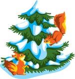 Esquilos Imagem de Stock Royalty Free