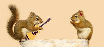 Esquilos de Yound no amor. Imagens de Stock