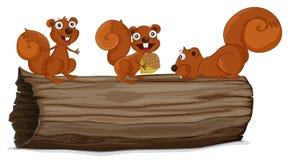 Esquilos em um log Fotografia de Stock