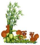 Esquilos felizes Fotografia de Stock