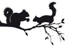 Esquilos na árvore, vetor Fotos de Stock