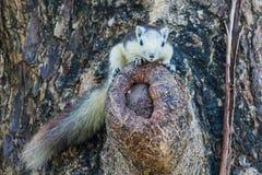 Esquilos na natureza Foto de Stock Royalty Free