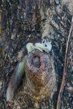 Esquilos na natureza Imagens de Stock Royalty Free