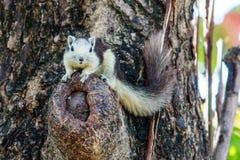 Esquilos na natureza Fotos de Stock