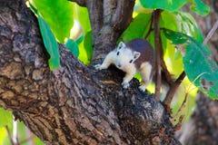 Esquilos na natureza Fotografia de Stock