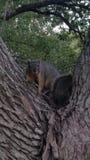 Esquilos no parque imagem de stock