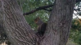 Esquilos no parque imagens de stock