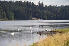 Esquimalt,看起来的盐水湖东部 免版税库存照片