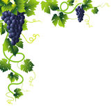 Esquina azul de las uvas stock de ilustración