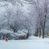 Esquina da rua da neve e árvores frescas, amanhecer foto de stock royalty free