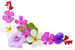 Esquina de la flor Foto de archivo libre de regalías