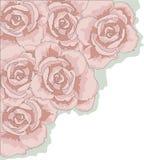 Esquina de Rose Imágenes de archivo libres de regalías