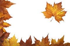 Esquina del otoño Foto de archivo libre de regalías