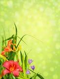 Esquina floral de la frontera Imagen de archivo libre de regalías