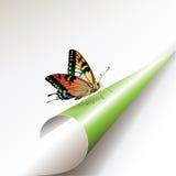 Esquina verde Imagenes de archivo