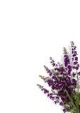 Esquina violeta Imagen de archivo libre de regalías