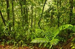 Esquinas雨林,哥斯达黎加 库存照片