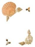 Esquinas del shell Foto de archivo libre de regalías