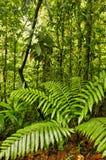 Esquinas Rain Forest, Costa Rica Stock Photography