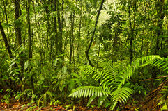 Esquinas Rain Forest, Costa Rica Stock Photos
