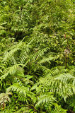 Esquinas Rain Forest, Costa Rica Stock Image