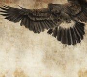 Esquissez effectué avec la tablette digitale de l'aigle américain Photo libre de droits
