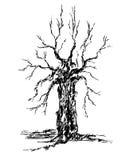 esquissez la couronne et le tronc d'un arbre sans illustration libre de droits