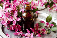 Essência da flor Fotos de Stock