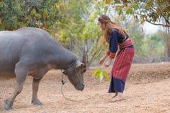 Essai asiatique de dame de longs cheveux pour alimenter le buffle avec le congé dans sa main Photographie stock libre de droits