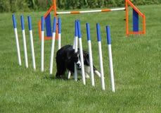 Essai d'agilité de chien Photo stock