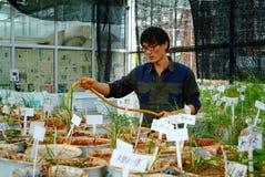 Essai sur riz dans le Chinois Image libre de droits