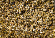 Essaim d'abeille image stock