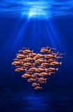 Essaim de poissons formant un coeur Images libres de droits