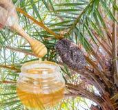 Essaim de ruche d'abeilles de miel Photographie stock libre de droits