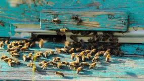 Essaim des abeilles à l'entrée à la ruche banque de vidéos