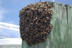 Essaim des abeilles Photos stock