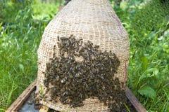 Essaim des abeilles et du panier en osier de ruche Photo libre de droits