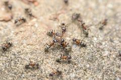 Essaim des combats de fourmis pour la nourriture image stock