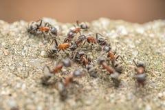 Essaim des combats de fourmis pour la nourriture photos stock