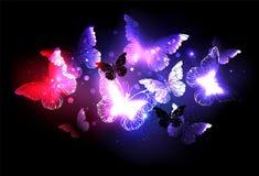 Essaim des papillons de nuit sur le fond noir images libres de droits