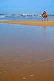 Essaouira Beach. Camel at Essaouira beach, Morocco, Africa Stock Image