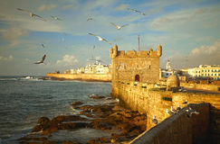 Essaouira Fortress, Morocco. Essaouira Fortress Morocco Africa. seagulls Royalty Free Stock Images
