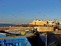 Essaouira gammal port i Marocko royaltyfri bild