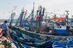 Essaouira, Maroc - 15 septembre 2013 : Bateaux de pêche en bois bleus ancrés dans le port historique avec des mouettes et des pêc Photos stock