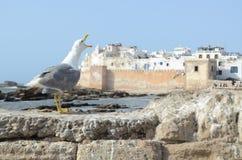 Essaouira Marocko Royaltyfri Fotografi