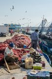Essaouira, Marokko - 15. September 2013: Nicht identifizierte lokale Fischer, die Netze am Hafen mit Seemöwen und Booten regeln Lizenzfreies Stockfoto