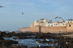 essaouira morocco Arkivbilder