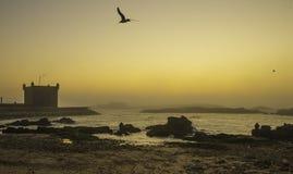 Essaouira, Morocco, Africa. Coastline in Essaouira, Morocco, Africa royalty free stock images