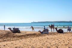 Essaouira strand med kamel Royaltyfri Fotografi