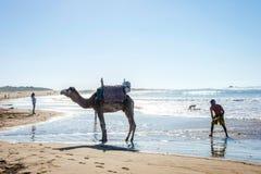 Essaouira strand med kamel Arkivfoton